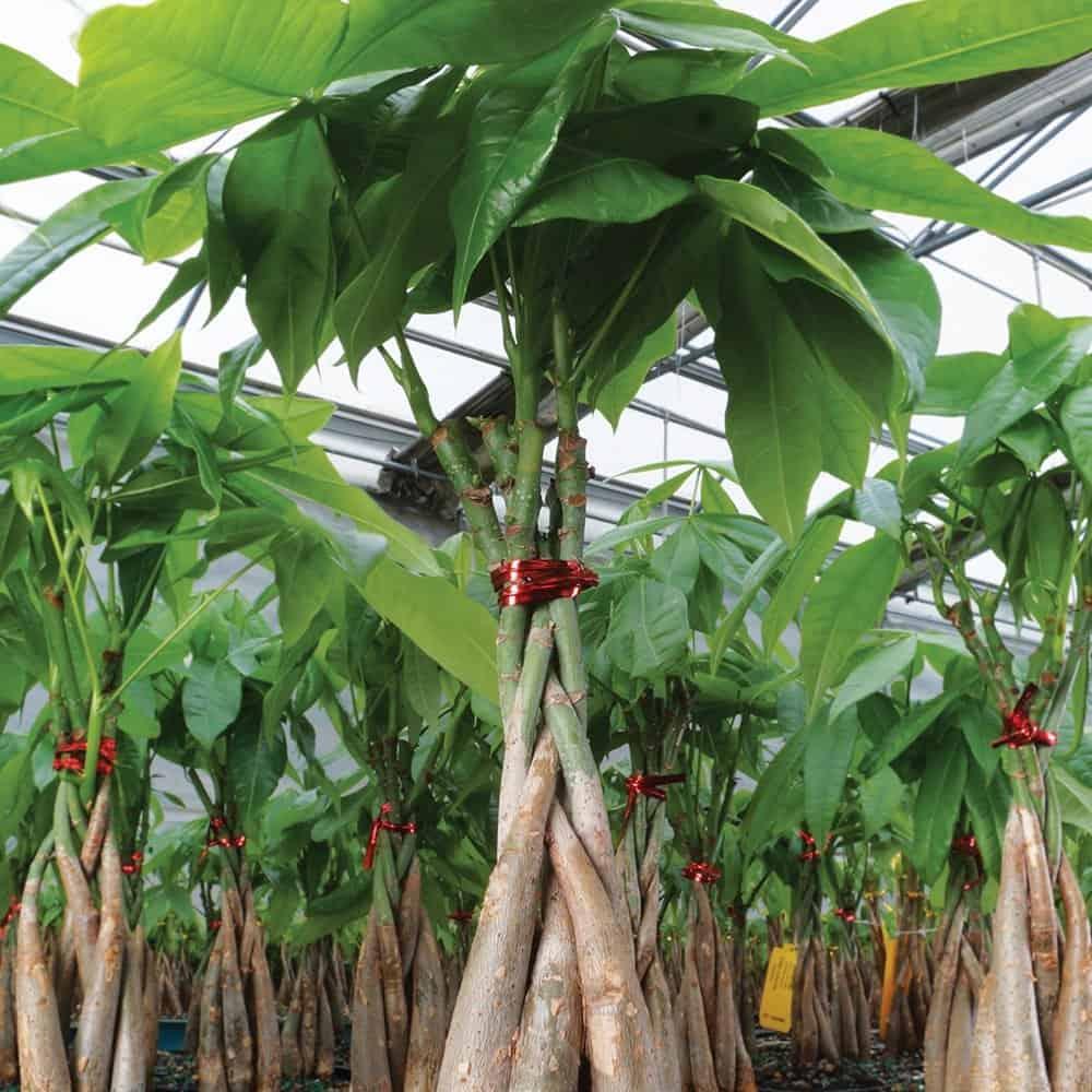 plante-Décorations-amazon-deco-maison-fleure-verte-interieur-tropicale-plante-appartement-depolluantes-entetien-gamm-conseils